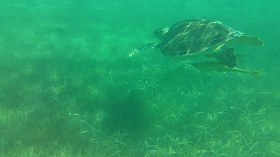 Local Quickies: Sea Turtle