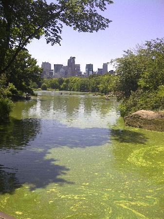 เซ็นทรัลปาร์ค: One of the lakes in Central Park