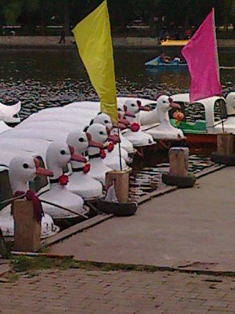 Nanhu Park: A flock of Geese Boats