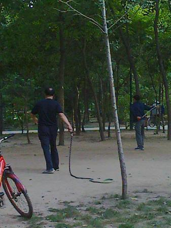 Nanhu Park: Bull Whipping in the Park!