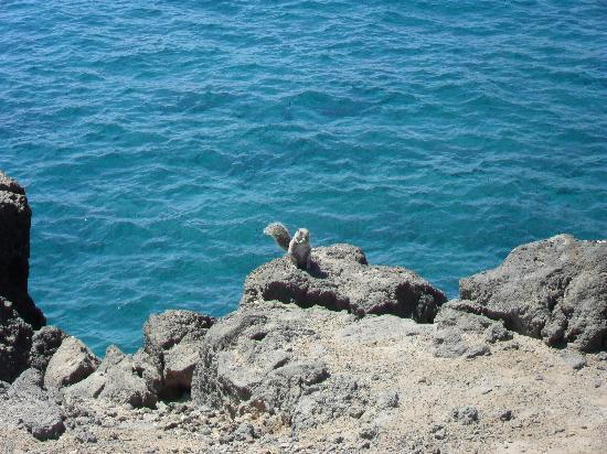 Bungalows Castillo Playa: Chipmunks