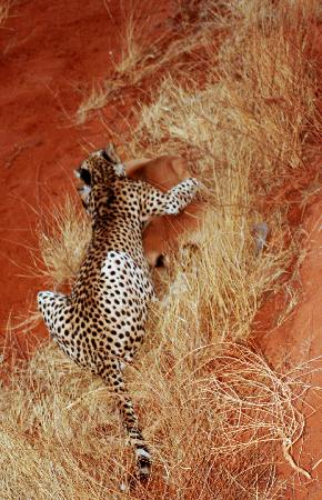 Safari Kenya Top - Private Day Tours: tsavo est