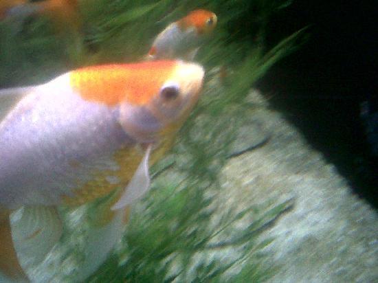 Acuario de Veracruz: pez