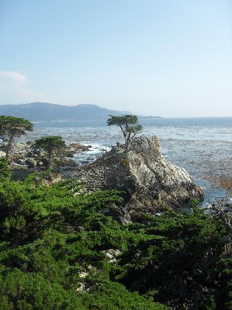 Seventeen Mile Drive: The lone Cypress