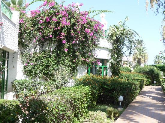 Hasdrubal Thalassa Hotel & Spa Port El Kantaoui: jardins fleuris de l'hotel