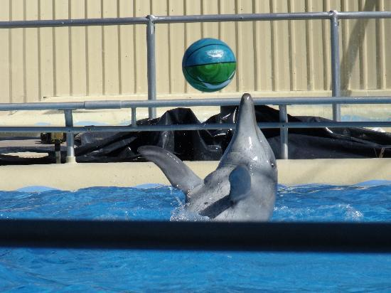 Coffs Harbour, Australia: The Dolphins