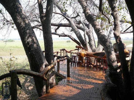 Tubu Tree Camp: Open bar