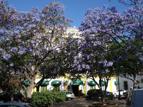 Loule Jardim Hotel: Hotel and Jacaranda Trees