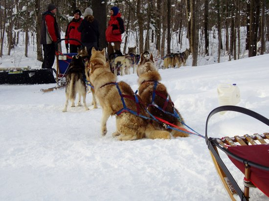 Lake Muskoka : dog sledding