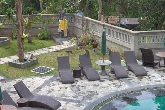 โรงแรมจัมปลุง ซารี: pool area during breakfast