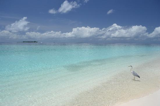 Fihalhohi Island Resort: Beach