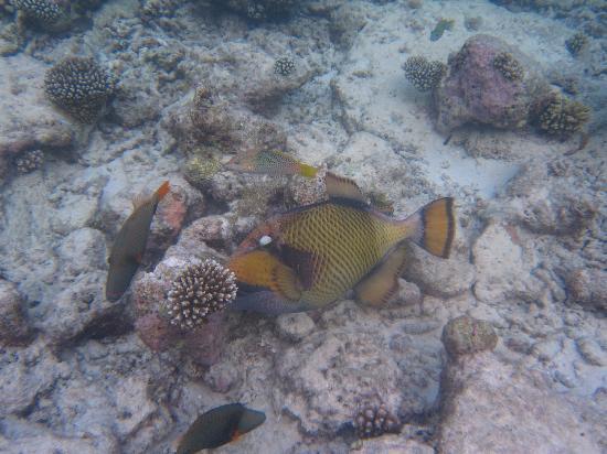 Fihalhohi Island Resort: Taken using the dive school underwater camera