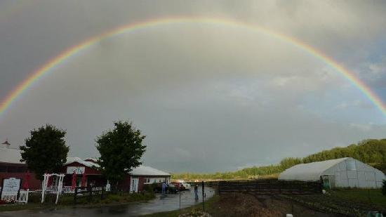 Hearth & Vine Cafe at Black Star Farms: Rainbow. Yes, everyone in the place ran outside.