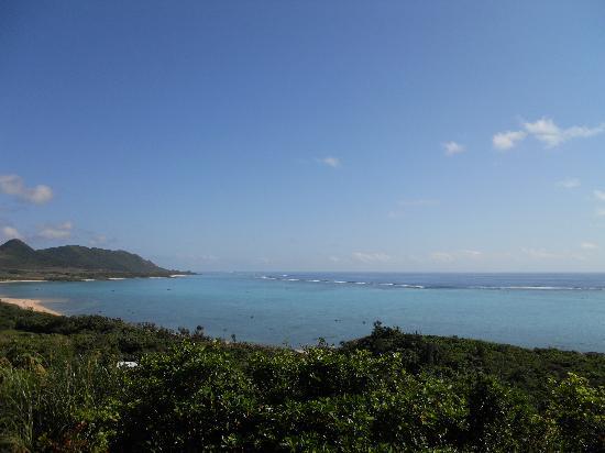 Sea Forest: この眺め
