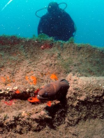 La Morena Diving: Une murène