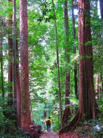 Gunung Raya: Cooling walking under the canopy!