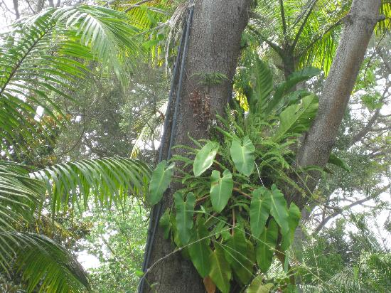 San Diego Botanic Garden: plants living in trees!