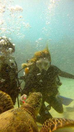 Oahu Diving: swimming with turtles