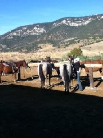 Jake's Horses: Julie getting the horses ready