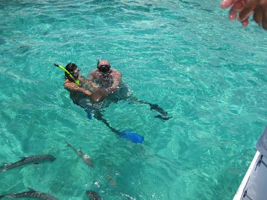 Sirena Azul Sailing Tours: David handing me a nurse shark