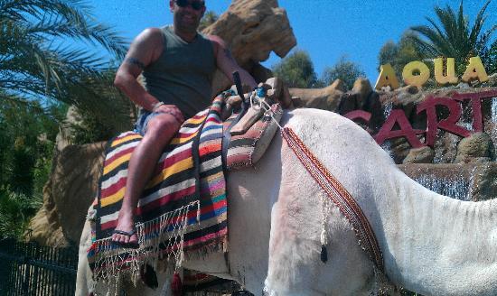 Concorde Hotel Marco Polo: camel at medina