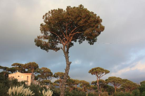 Pineland Hotel and Health Resort: Sunset