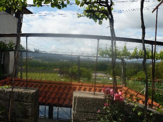Quinta da Aveleda: The vineyards