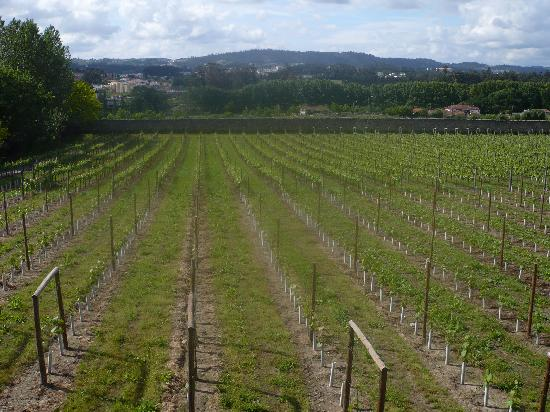 Quinta da Aveleda: The vineyards