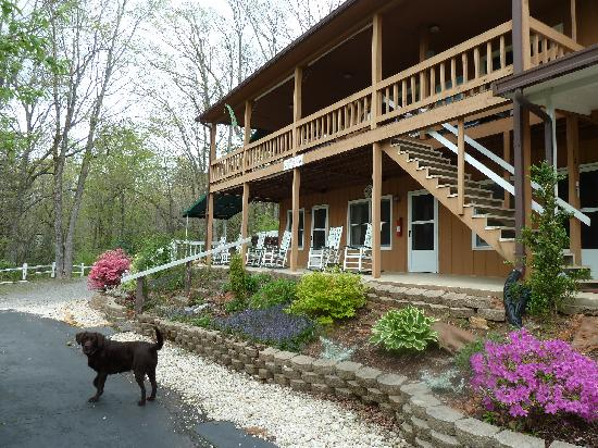 The Mountain Getaway: Tootsie - official greeter and wildlife patrol dog