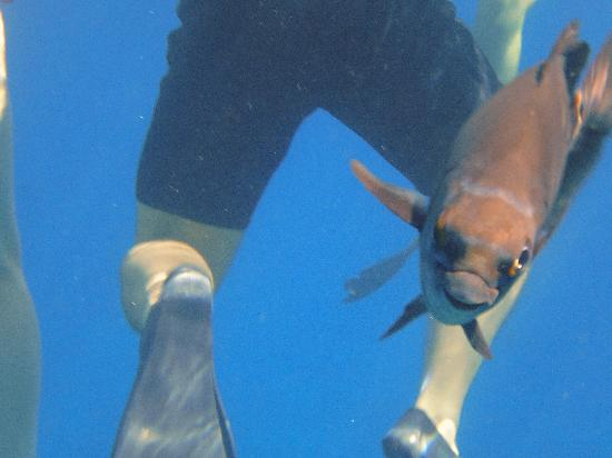 Quicksilver Maui Snorkeling Charters: Even smiling fish!