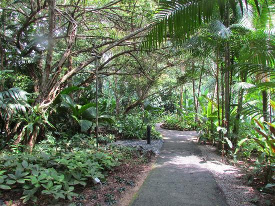สวนพฤกษชาติสิงคโปร์: Singapore Botanical Gardens