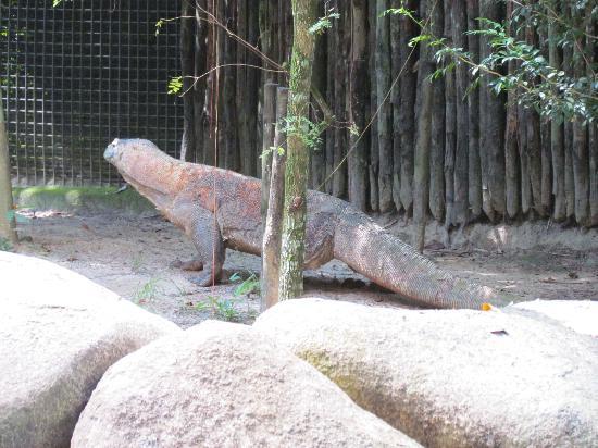 สวนสัตว์สิงคโปร์: Singapore Zoo