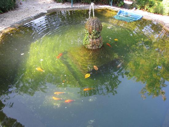 Casa da Azenha: Fishes