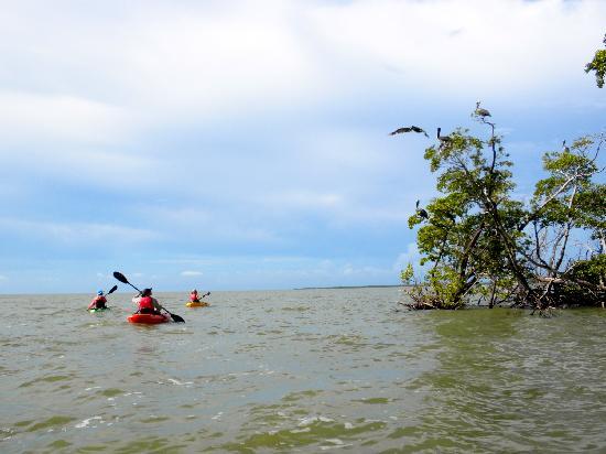 Up a Creek Kayak Tours: Unexpected Visitors