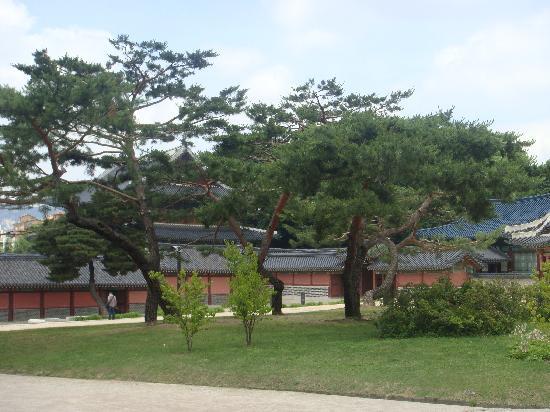 พระราชวังชังด็อก: Palace Grounds