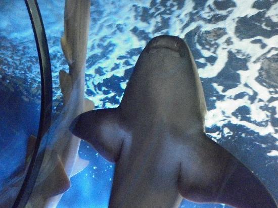 Loro Parque: shark