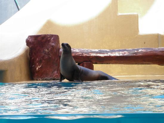 Loro Parque: sea lion