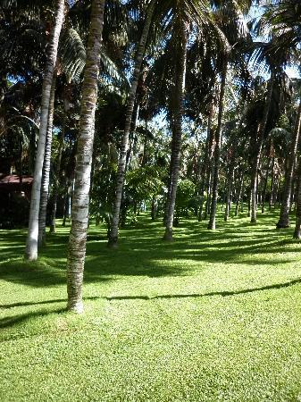Loro Parque: palms