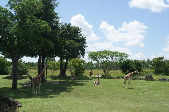 Zoo Miami: Imperdível