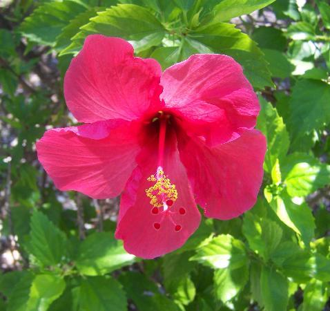เกาะซานิเบล, ฟลอริด้า: flower