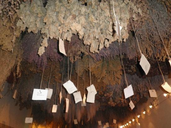 Aboca Museum: erbario