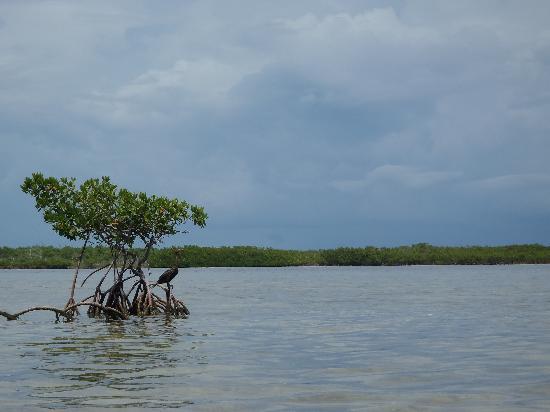 Big Pine Kayak Adventures: In the mangroves around Big Pine Key
