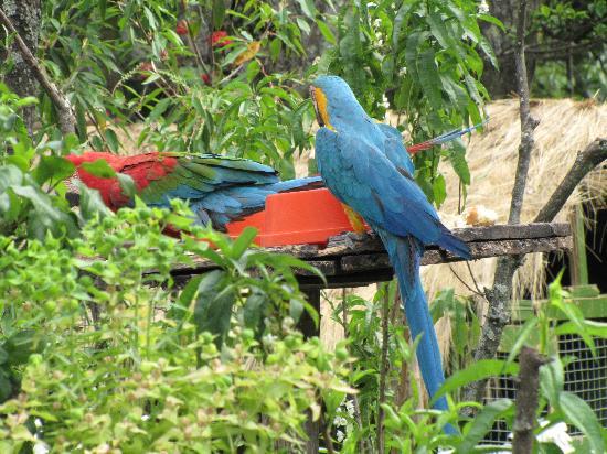 Aranwa Sacred Valley Hotel & Wellness: Resident color