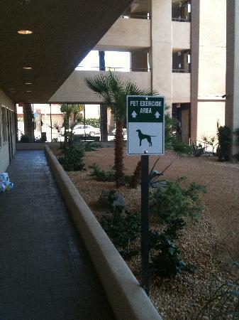 Hyatt Palm Springs: outside hall way rooms 101-107