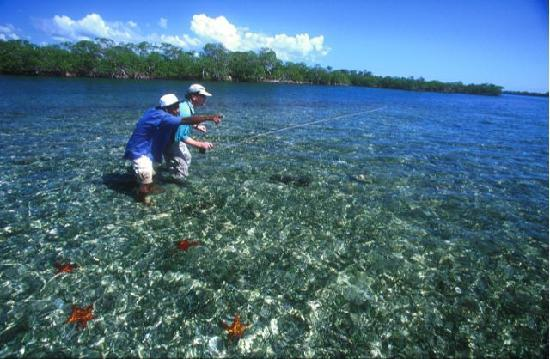 El Pescador Resort : Starfish while wading for permit