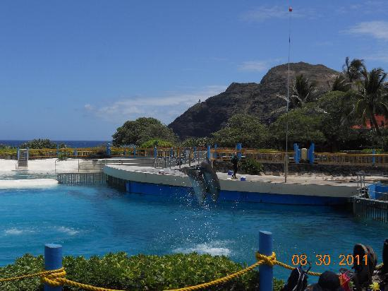 Sea Life Park Hawaii: Dolphin Cove Show