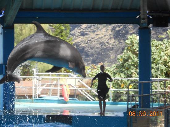 Sea Life Park Hawaii: Hawaii Ocean Theatre