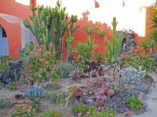 Hotel Casona Solar: Garden