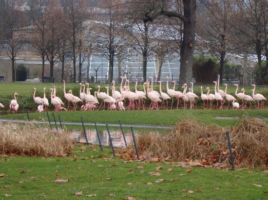 Wilhelma Zoo and Botanical Garden: birds