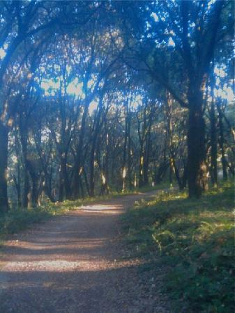 Henry Cowell Redwoods State Park: wandering path